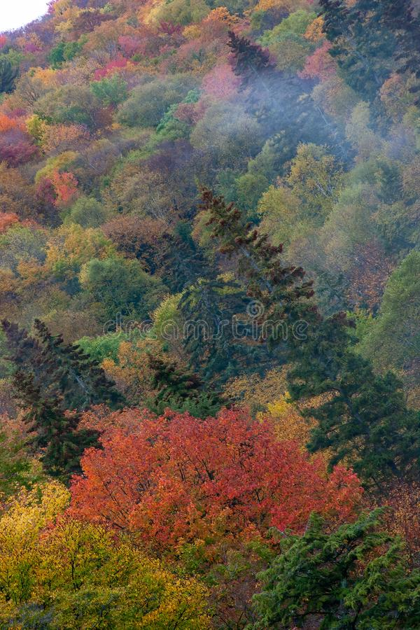 Foggy afternoon in the Upper Peninsula of Michigan during the fall color season royalty free stock images