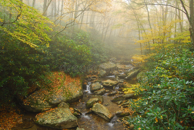 Foggy Appalachian Stream with Autumn Foliage royalty free stock photo