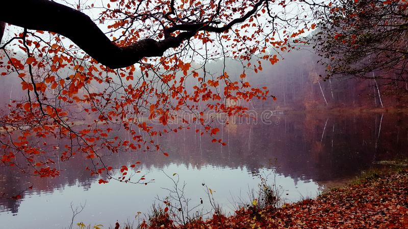 Foggy autumn. Foggy autumn afternoon at the lake royalty free stock image