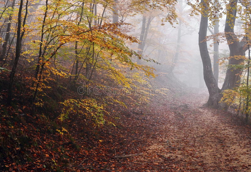 Fog in Autumn Forest With Road royalty free stock image