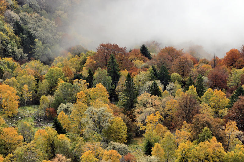Fall Forest. Foggy Autumn Forest in Fall royalty free stock photography
