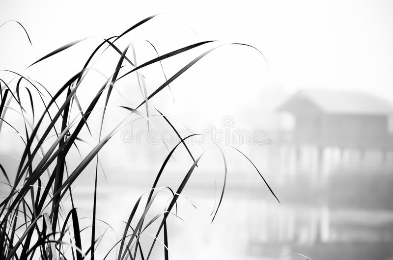 Foggy autumn landscape in black and white. Tisza backwater in Hungary. Wooden house on the shore. stock photography