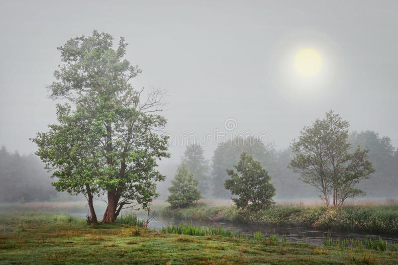 Foggy autumn landscape of trees on river bank in gray cold morning. stock image