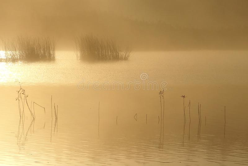 Foggy autumn morning .Lithuania landscape . stock photos