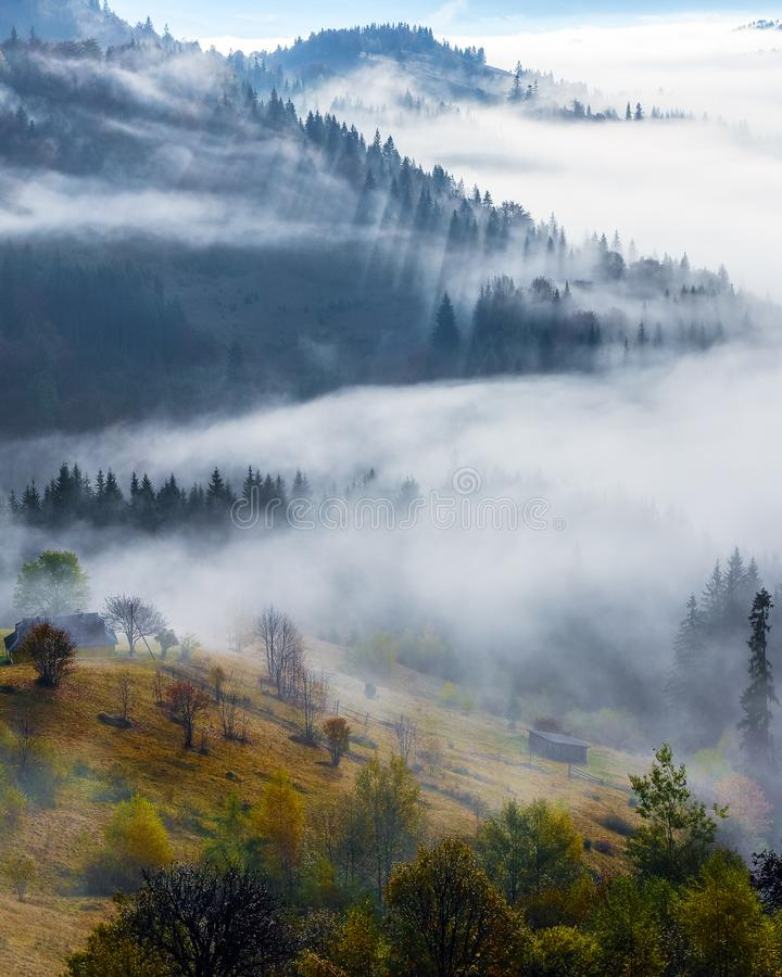 Foggy autumn morning. The lawn with the fruit trees and bushes. Landscape of high mountains and forests. The sun rays are shining through the fog. Location stock images