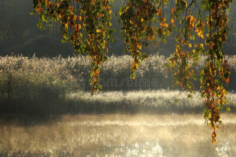 Foggy autumn morning .Lithuania landscape . stock photo
