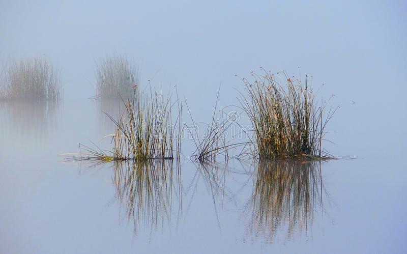 Foggy autumn morning .Plants reflections in the water stock images