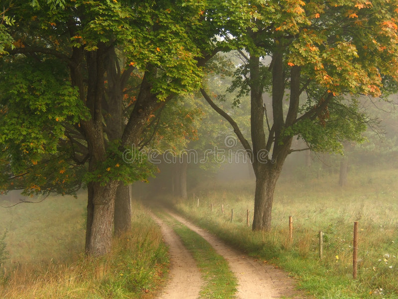 Download Foggy Autumn Road Royalty Free Stock Photography - Image: 1500127