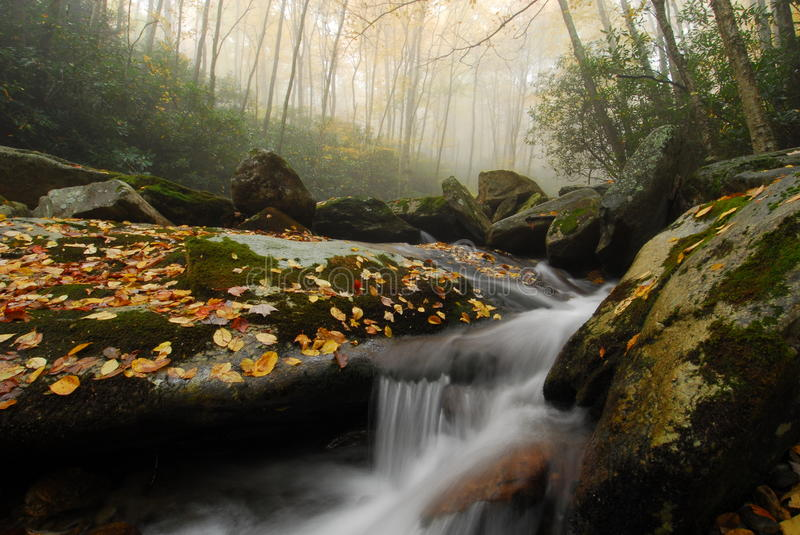 Foggy Autumn Stream in North Carolina stock images