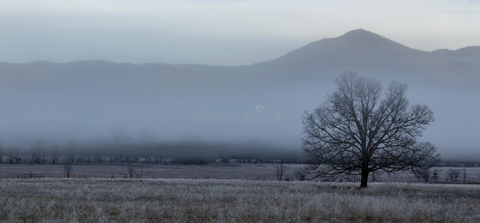 Foggy cades cove morning in great smoky mountains national park stock images