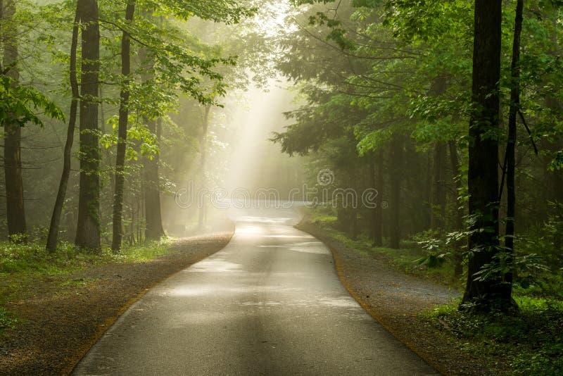 Foggy Cades Cove roadway stock photo