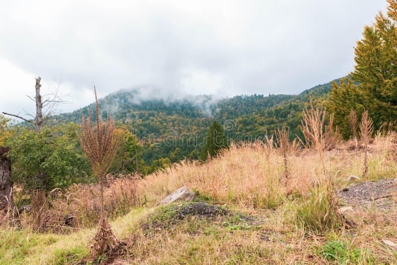 Foggy Carpathian Autumn landscape stock image