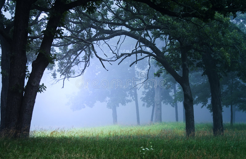 Foggy clearing stock photos