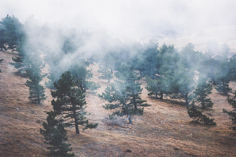 Foggy Coniferous Forest Landscape misty trees. Background Travel serene scenic aerial view royalty free stock photo