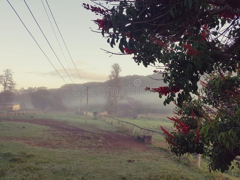 Foggy country morning with power lines and fence royalty free stock photo