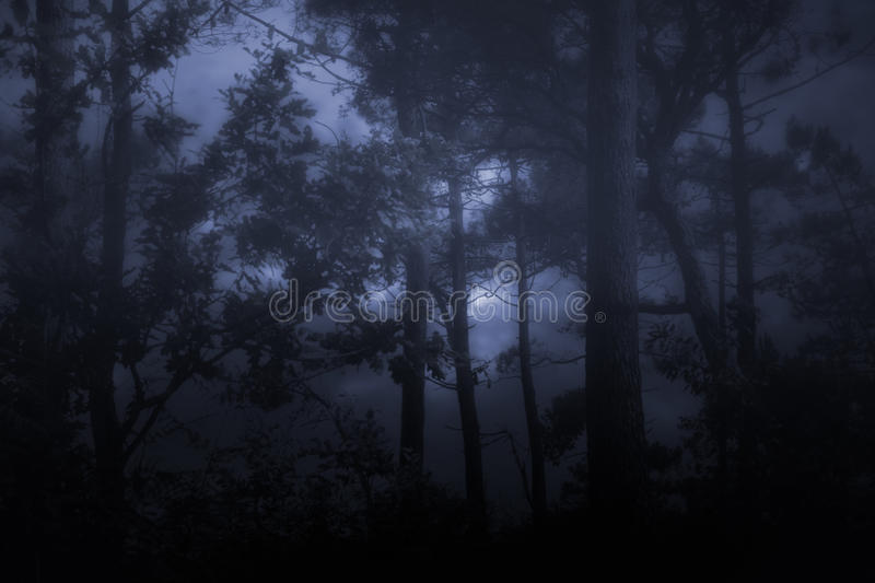 Foggy and dark wooids stock photography
