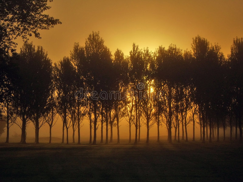Foggy Dawn stock images