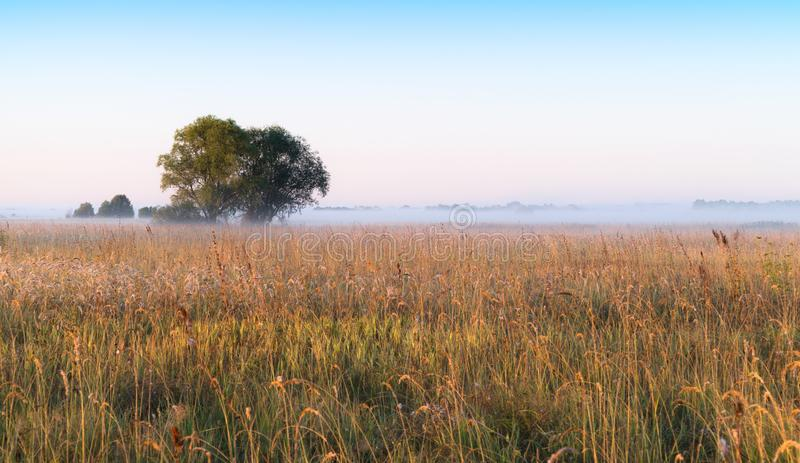 Foggy dawn royalty free stock photo