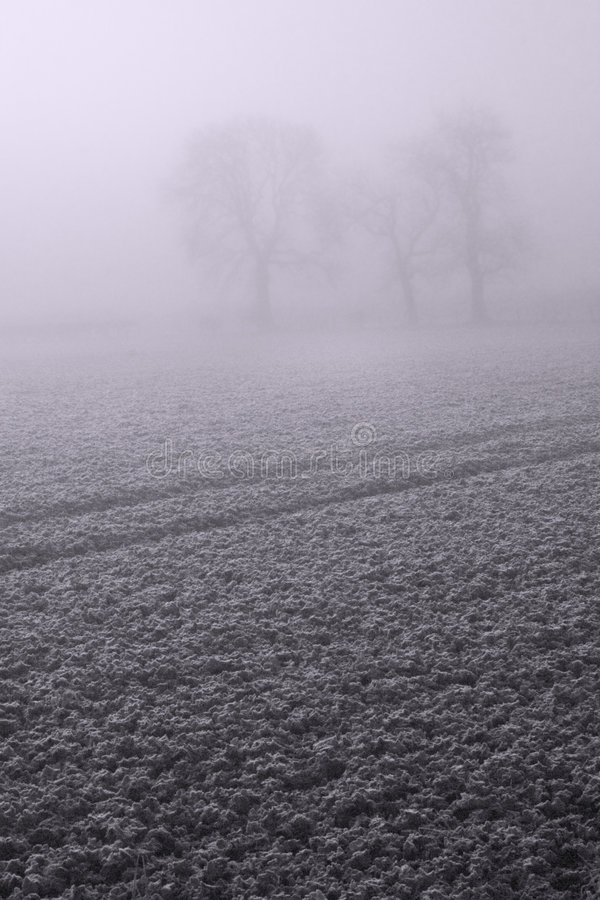 Foggy Day 1 stock photo