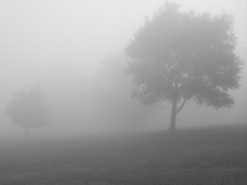 Download Foggy Day BW stock image. Image of trees, focus, background - 471065