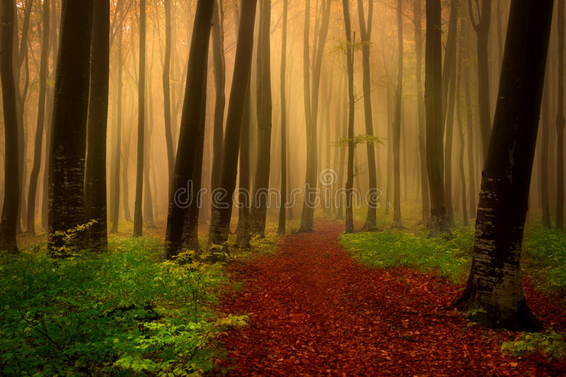 Foggy day into the forest during autumn. Image made in late November in an afternoon into the forest royalty free stock photo