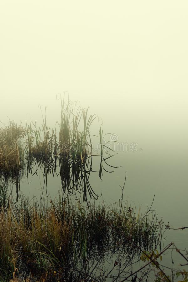 Foggy day on the small lake royalty free stock images