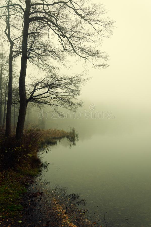 Foggy day on the small lake stock photography