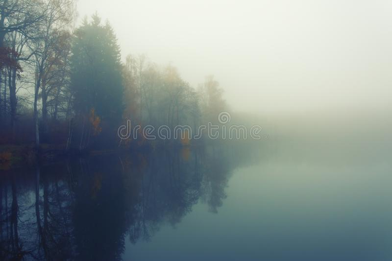 Foggy day on the small lake. Trees and grass are mirroring in the foggy surface of the pond royalty free stock images
