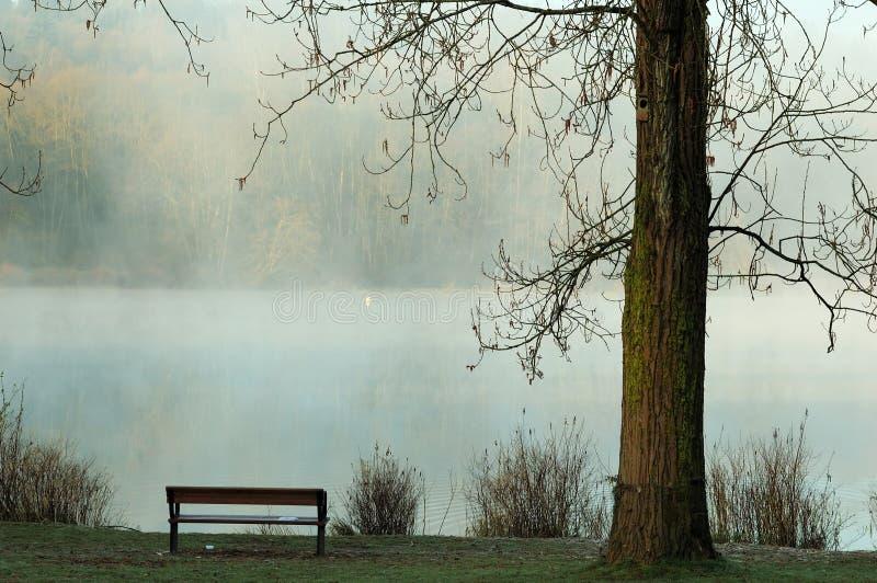 Foggy deer lake royalty free stock images