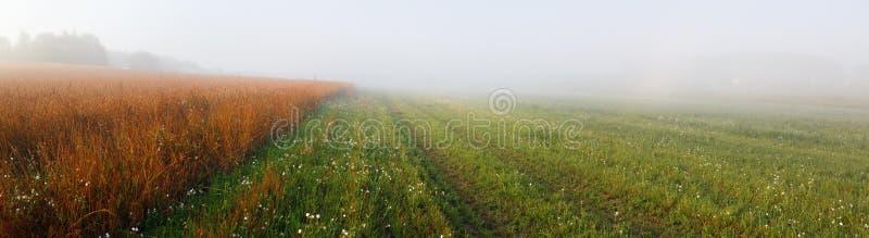 Foggy early morning royalty free stock photo