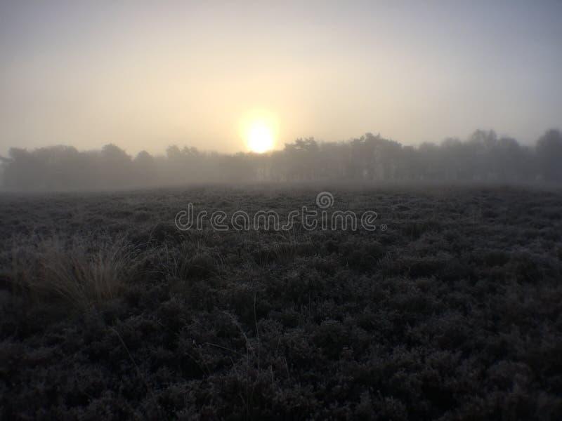 Foggy stock photography
