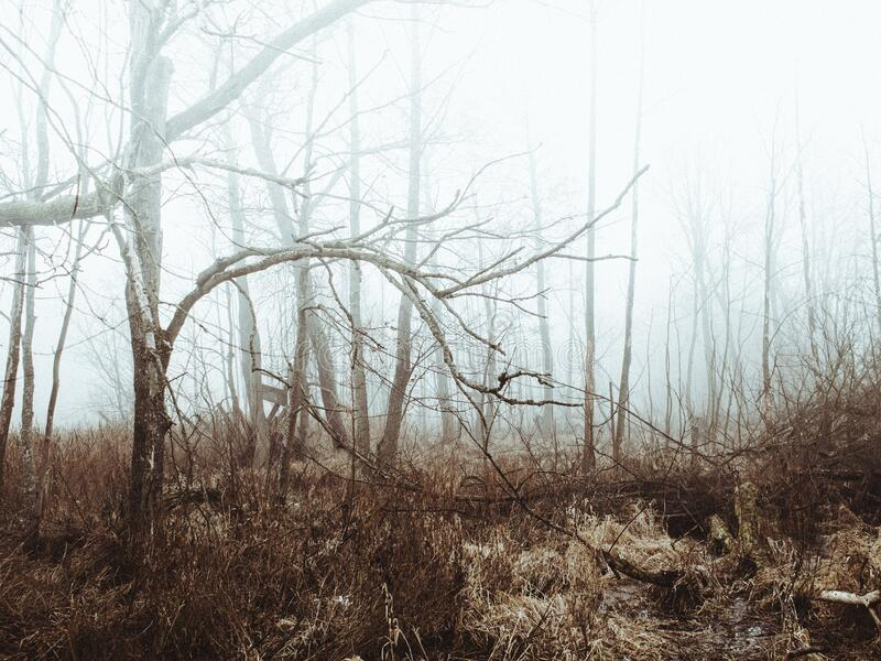 Foggy field and forest royalty free stock photos