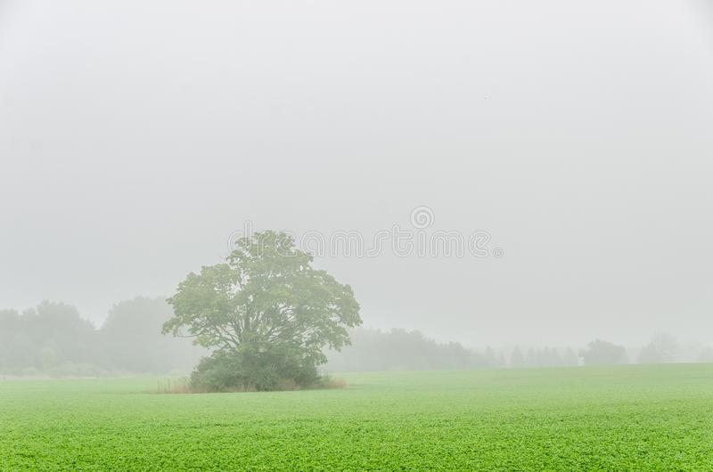 Foggy Field With Large Tree stock photography