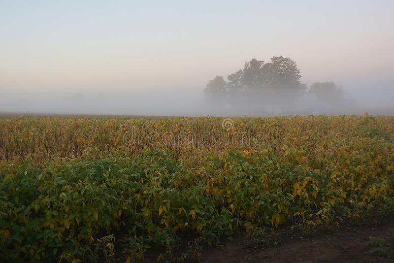 Foggy Field Sunrise royalty free stock image