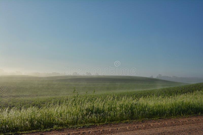 Foggy Field royalty free stock photos