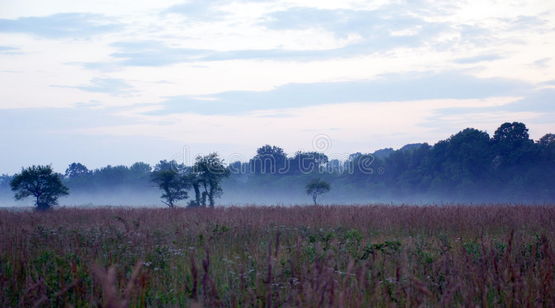 Foggy Fields Stock Images