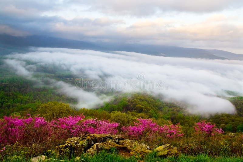 Foggy flower meadow stock images