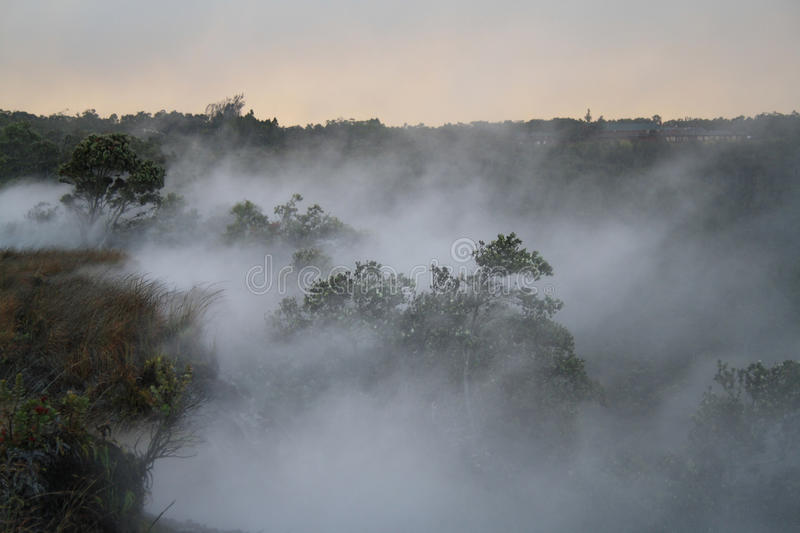 Foggy forest. Fog rises over the kilauea crater from steam vents royalty free stock photo