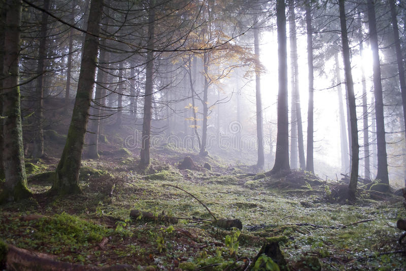 Foggy forest stock images