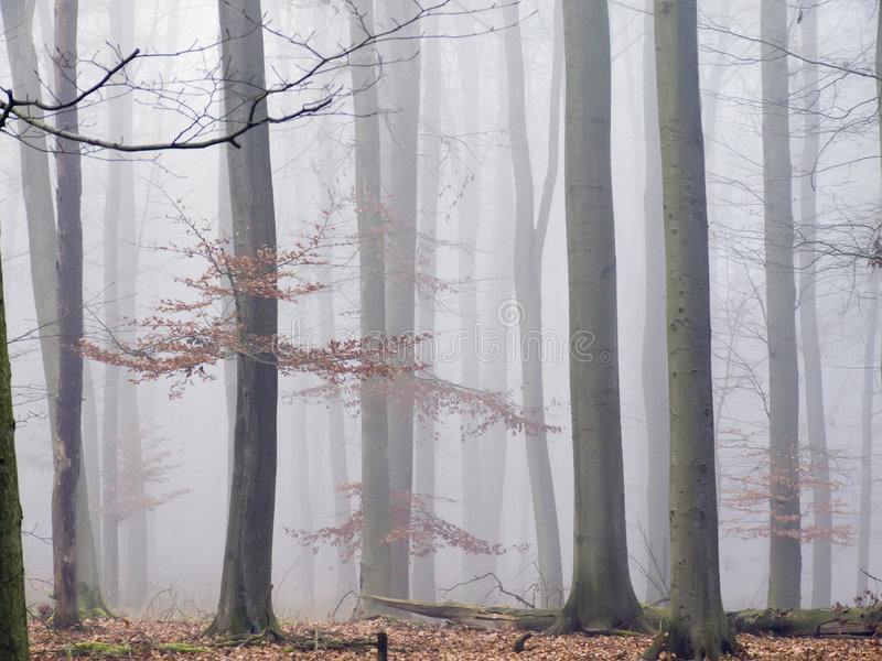 Foggy forest. In the late autumn royalty free stock photo