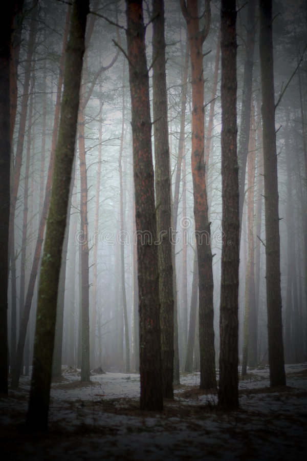 In the foggy forest stock images