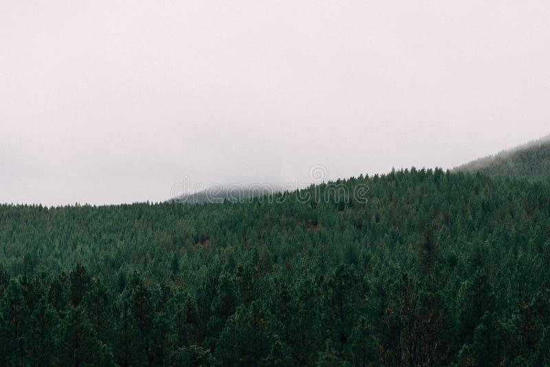 Foggy Forest Free Public Domain Cc0 Image