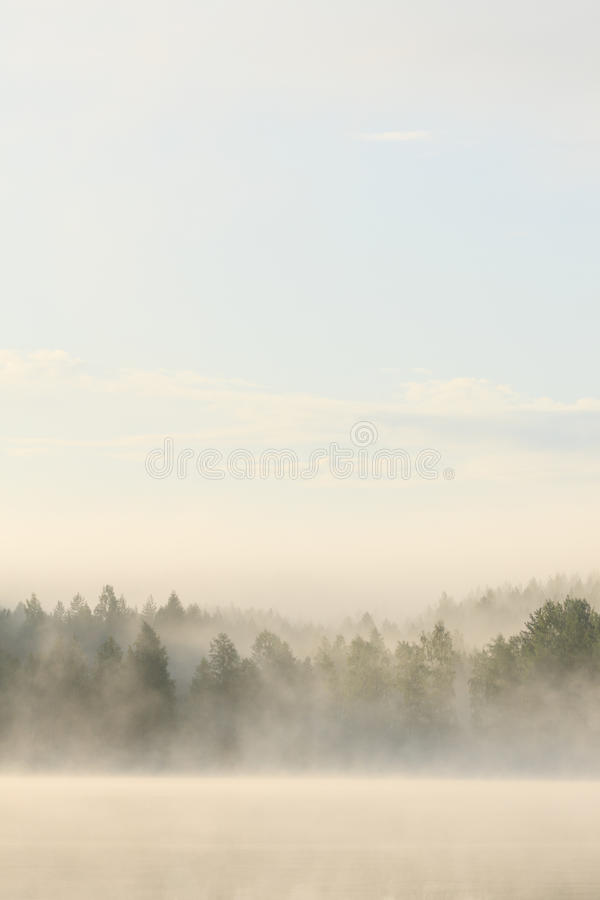 Free Foggy Forest And Lake At Dawn Stock Photos - 88600503