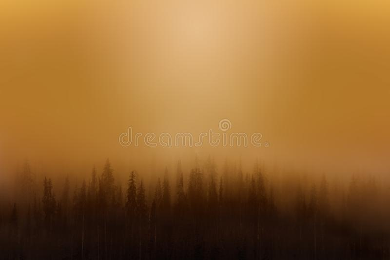 Foggy forest blurred background. Natural environments concept. Foggy forest blurred background. Natural environments concept stock photos