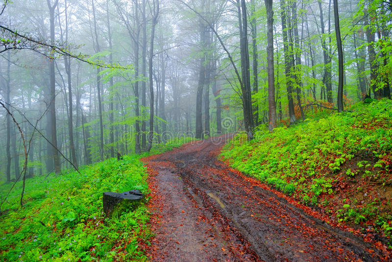 Foggy forest and dirt road stock photo