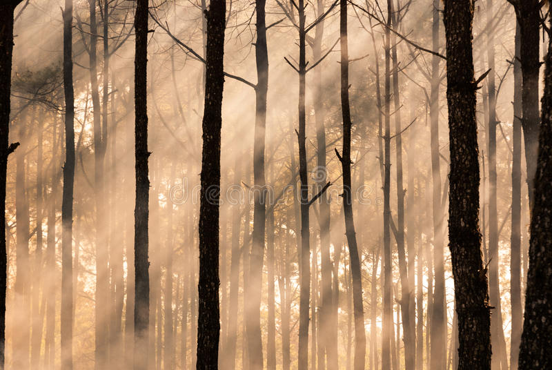 Foggy forest in early morning. In thailand stock image