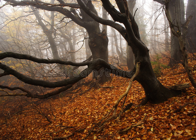 Download Foggy Forest In Giant Mountains Royalty Free Stock Image - Image: 1005856