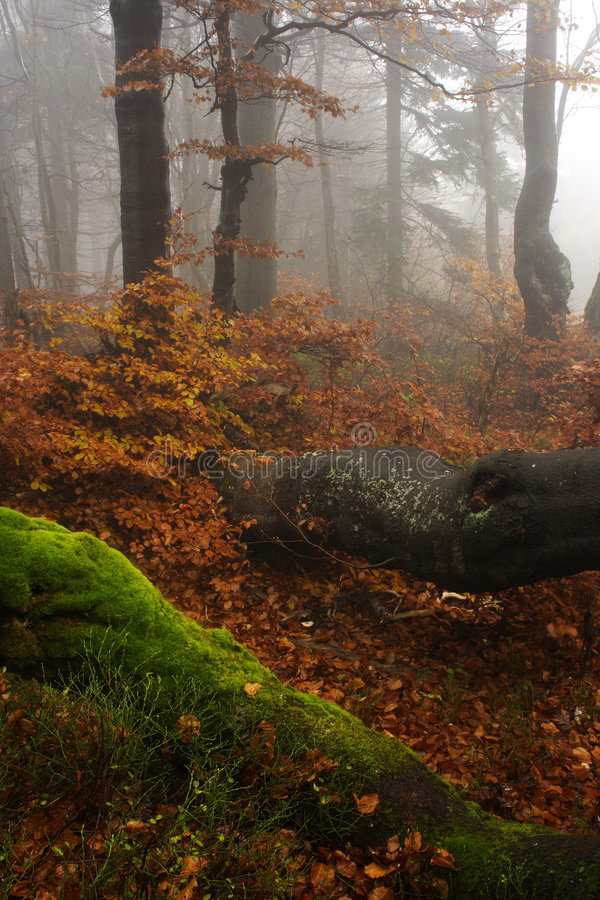 Download Foggy Forest In Giant Mountains Stock Image - Image: 1006103