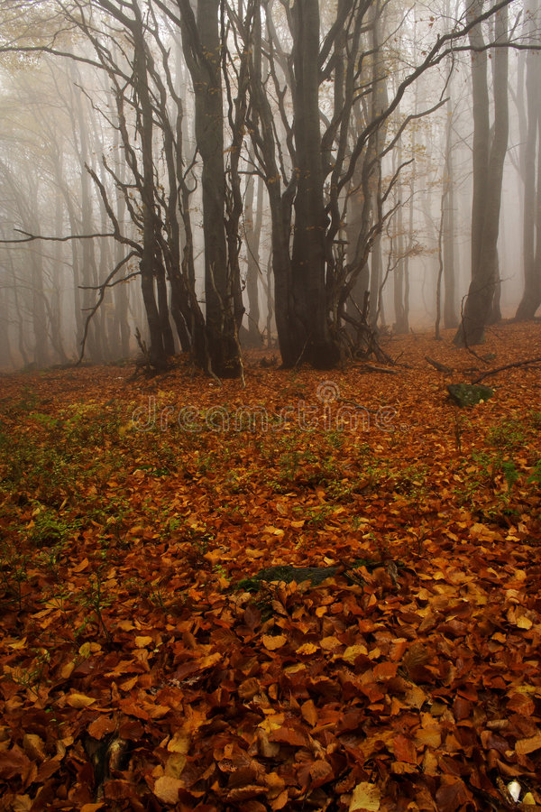 Free Foggy Forest In Giant Mountains Royalty Free Stock Photos - 1005738