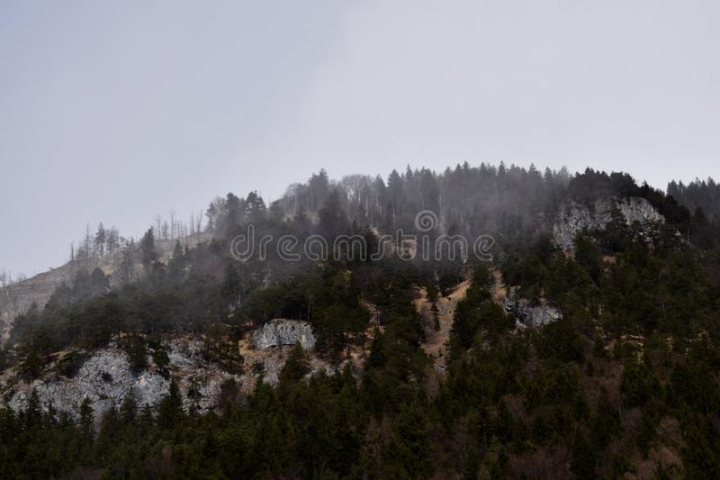 Foggy forest. This nature picture with the title foggy forest was taken in Austria royalty free stock photography